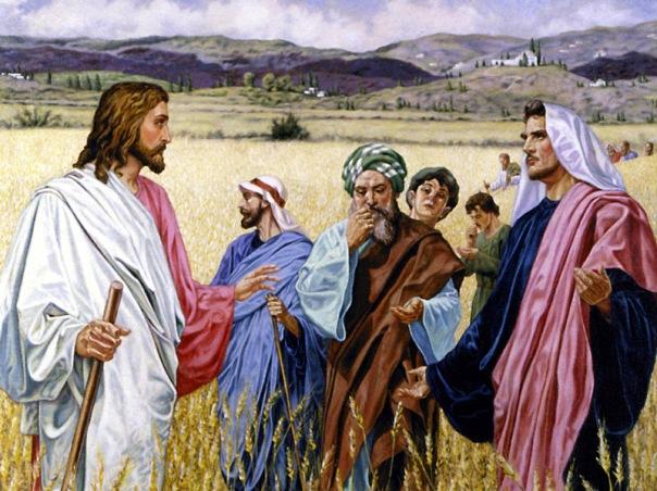 Mateus 12, 1-8